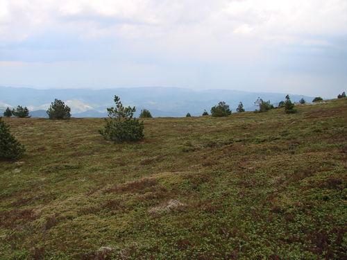 2008 05 11 Sur les heuteurs du sommet du Mont Mézenc