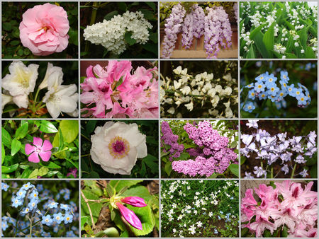 Fleurs_de_mai