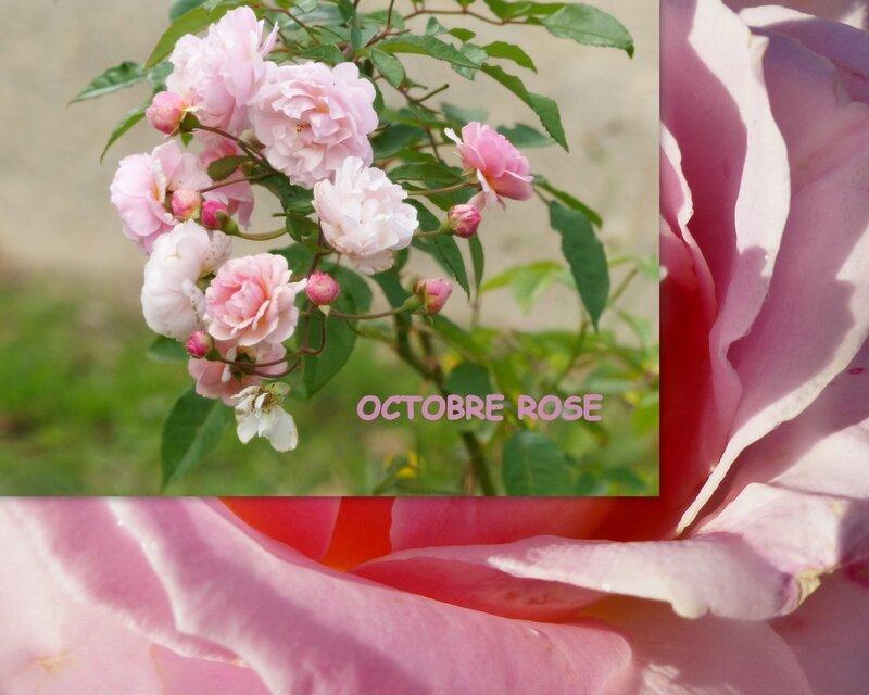 OCTOBRE ROSE 2015