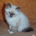 Samouraï 2 mois, photo Flo