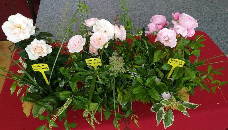 Concours roses nouvelles 2017 - vendredi 2 juin (17)