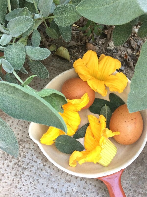 Préparation omelette aux fleurs de courgette
