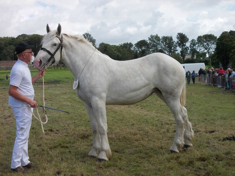Donzelle d'Avesnes - Concours National - 25 Juillet 2015 - 3e 2 ans Grandes Tailles