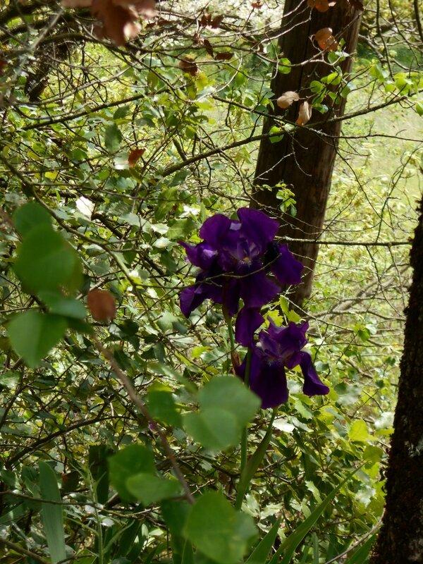 Le printemps du côté de chez nous