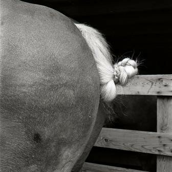 Horsetail © Ricardo BLOCH