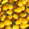 9 - tomate cerise poire jaune - www.passionpotager.canalblog.com