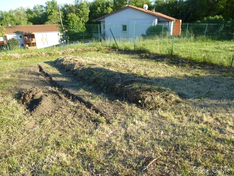 Potager permaculture 15
