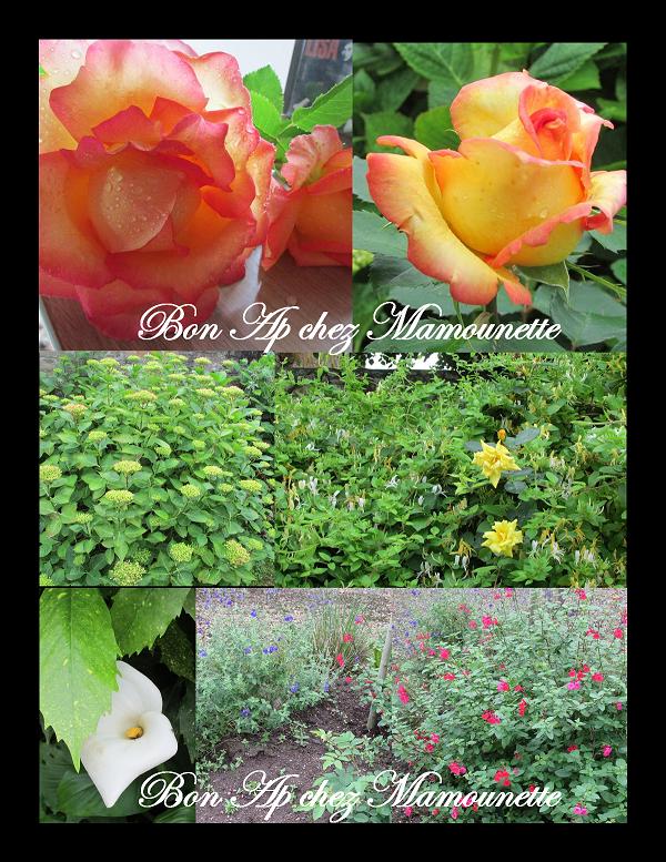 Roses, hortensias, chèvrefeuille, arum, sauge