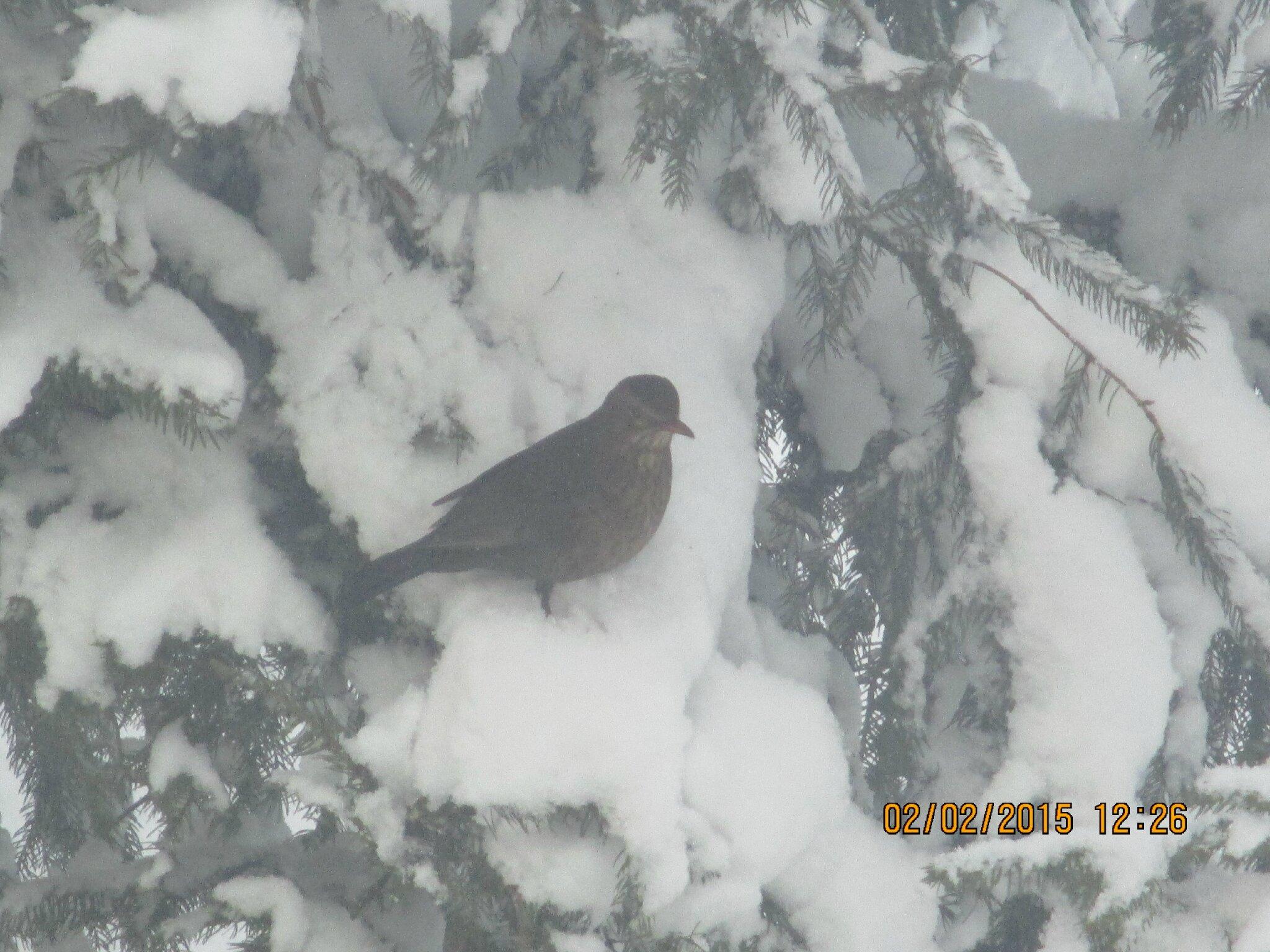 25 cm de neige et -8°, a glagla l'hiver est bien là!!