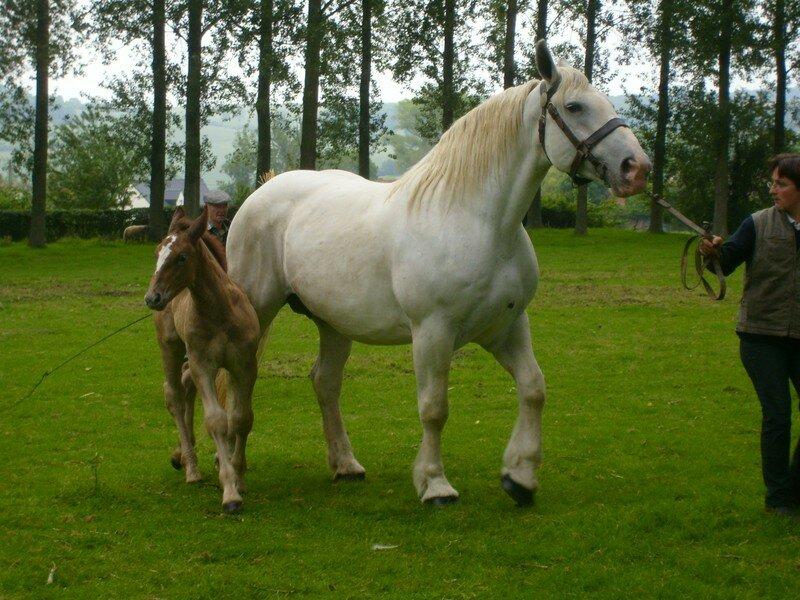 elevage de cheval dans les deux sevres