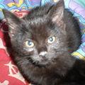 ma nouvelle princesse, Kuchi