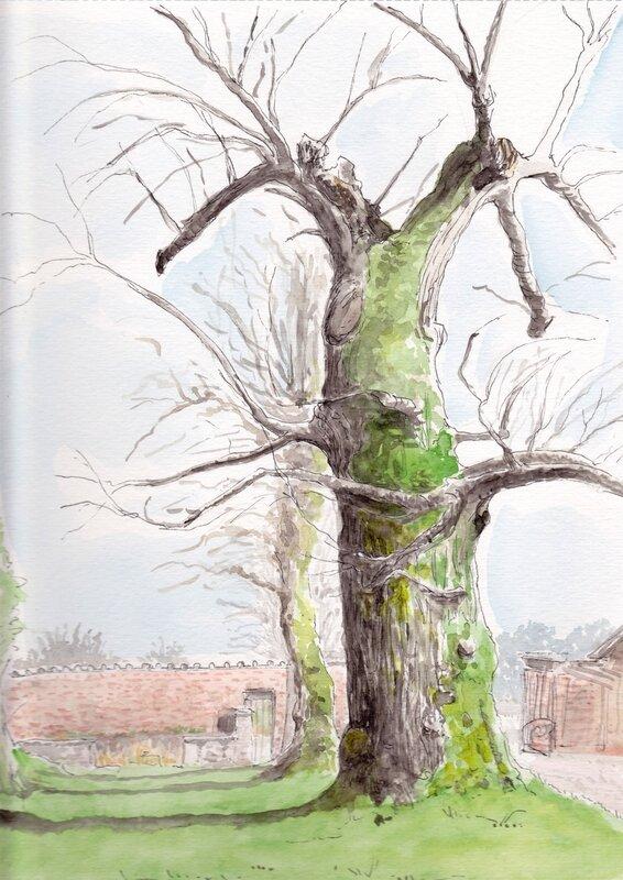 201503 arbre fendu Chardenoux