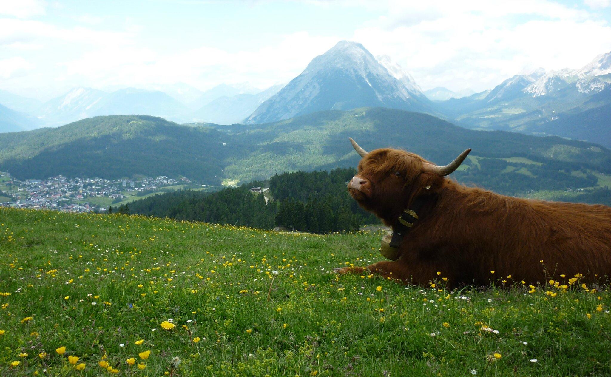 Dans mon carnet de voyage... le Seefelder Spitze !