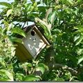 Quelques photos récentes des pommiers...