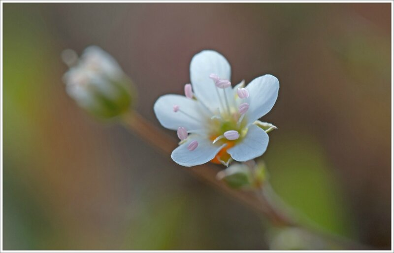Sabline 290515 7 fleur ym