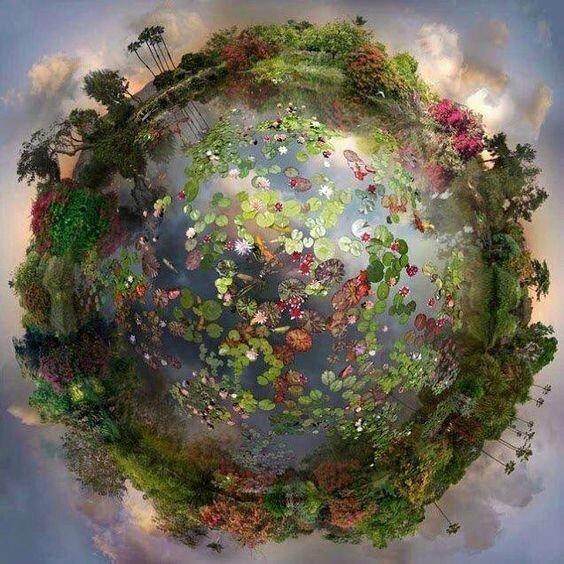 52 semaines de gratitude-billet°6: Quelque chose d'inspirant La nature