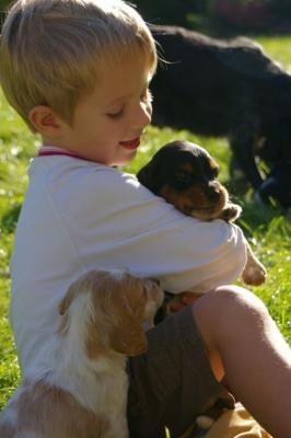 2007 09 meo et bb chiens 3