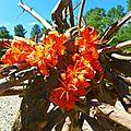 lys tigré en bouquet de plage yurtao