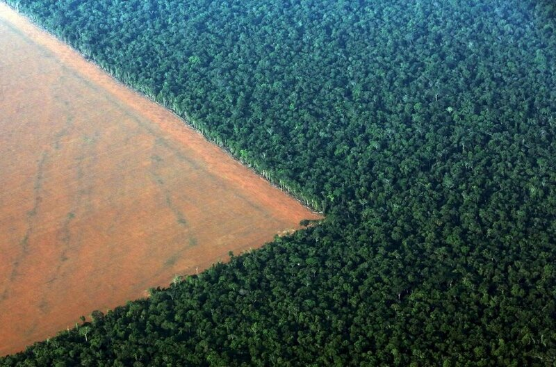 1021151-the-amazon-rain-forest-r-bordered-by-deforested-land-prepared-for-the-planting-of-soybeans-is-pictur