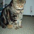 Monroe, le gros chat bouffe/chie/dort, qui ne me depaysage pas des chats qui m'entour (surtout dans la maison en face de ma maison natale)