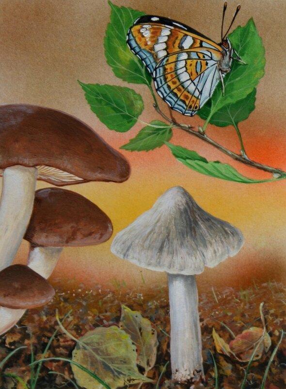 Planche champignon 66