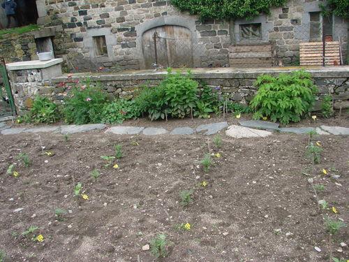 2008 06 11 Une partie de mon jardin, vivace le long du mure