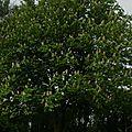 03- Les arbres du jardin