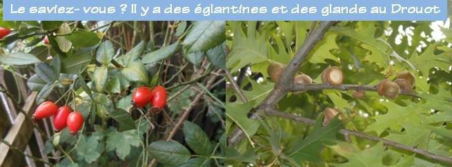 Des églantines et des glands au Drouot