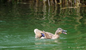 canards_repro07