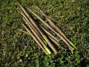 Pousses de bambous 1000