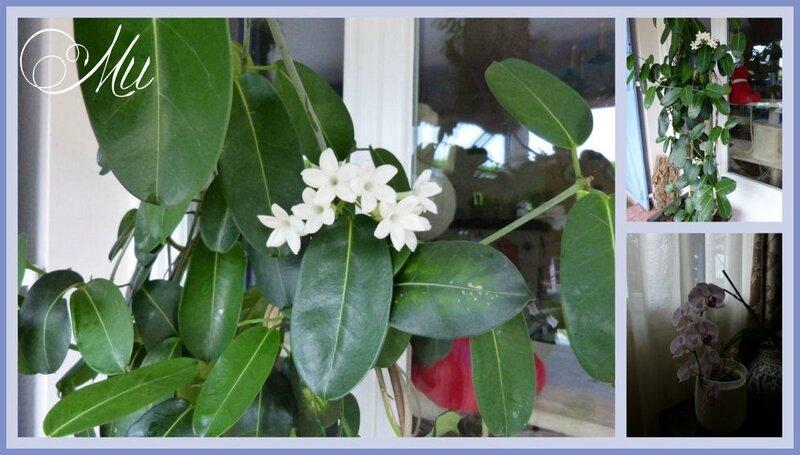 fleurs 29 06 16