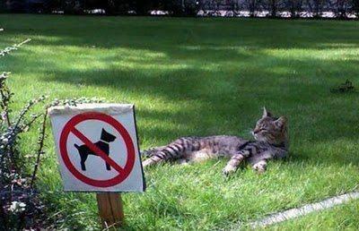 chien interdit