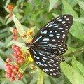 Cameron Highlands, butterfly farm