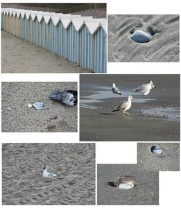 mouette et coquillages