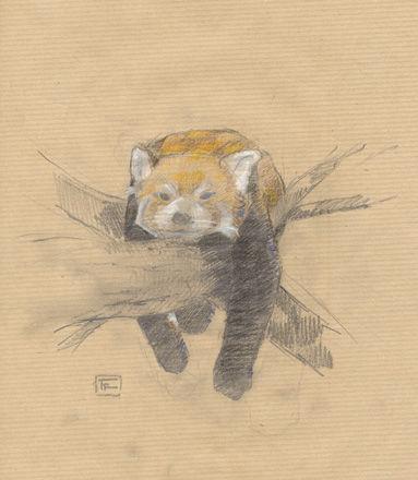 126 - PandaRoux 05