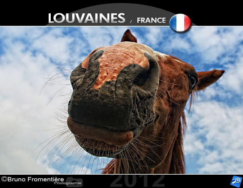 Horse head 800