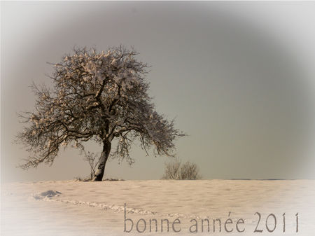 Voeux_2011_2