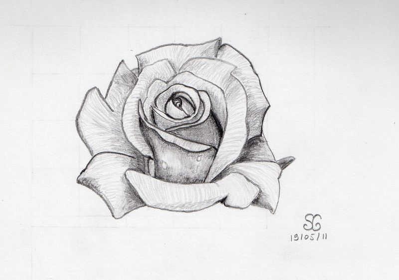 Dessin Dune Rose Rouge