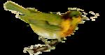 oiseau_jaune_et_vert
