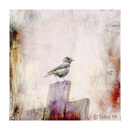 L'oiseau de notre jardin