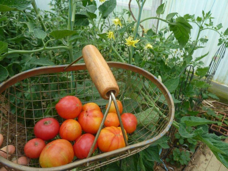 31-tomates (1)