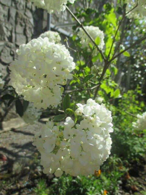 jardin 6 mai2016 013