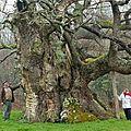 Avec terre-sauvage et l'onf, élisez l'arbre de l'année 2013 !