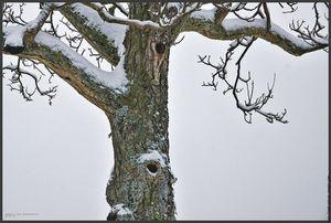 dsc03031_2_nids_d_oiseaux_dans_un_noyer_sous_neige2010_1280x853