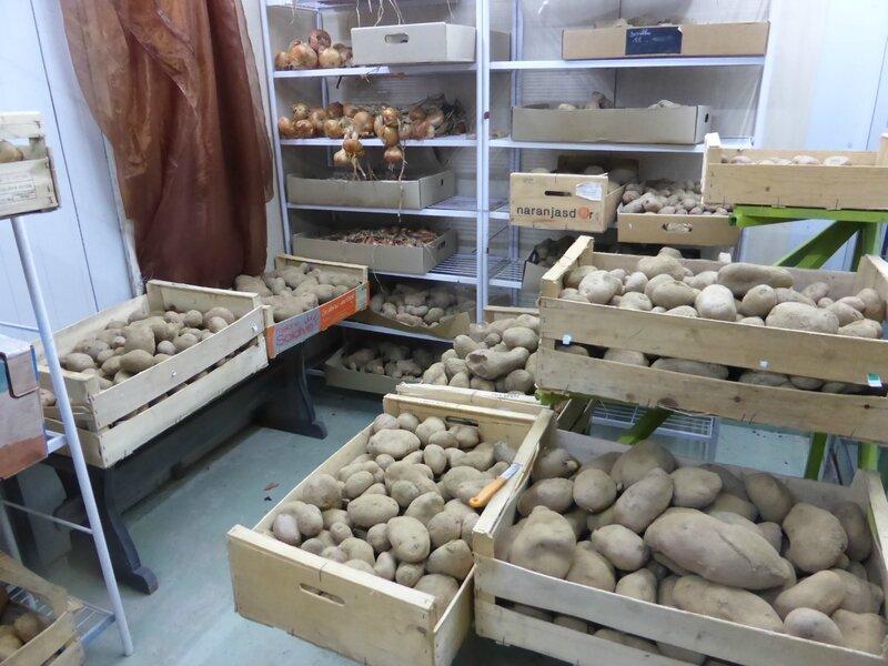 9-pommes de terre (5)