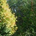 arbres pezanin