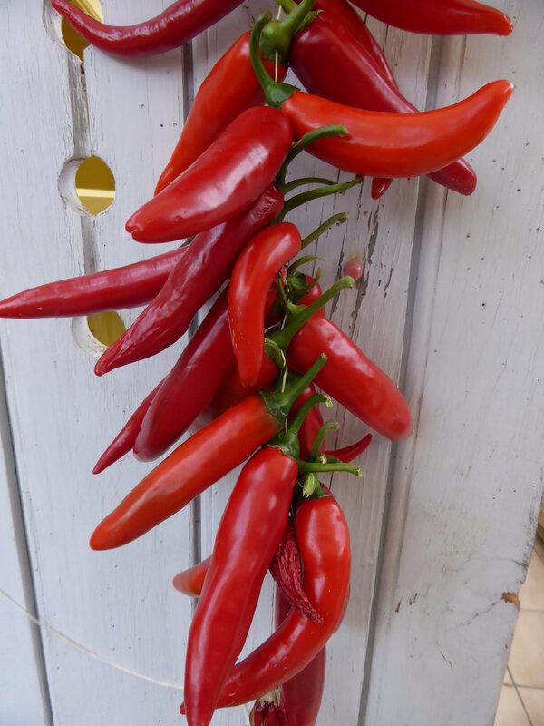 15-piments du maroc (5)