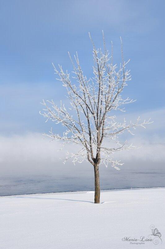 arbrehiver2