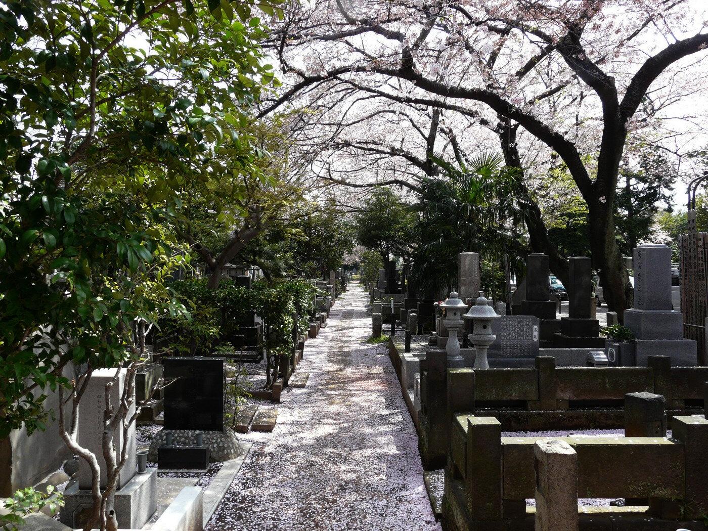 les cerisiers en fleurs dans les cimeti res japonais mon amour pour le japon et t ky. Black Bedroom Furniture Sets. Home Design Ideas