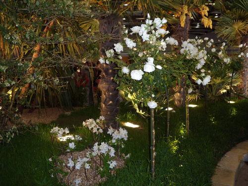 Floralies 111